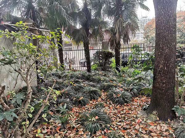 3月10日,兰城小区居委会召开现场协调会时选定的小区内排便点。澎湃新闻记者 任雾 实习生 马婕盈 图