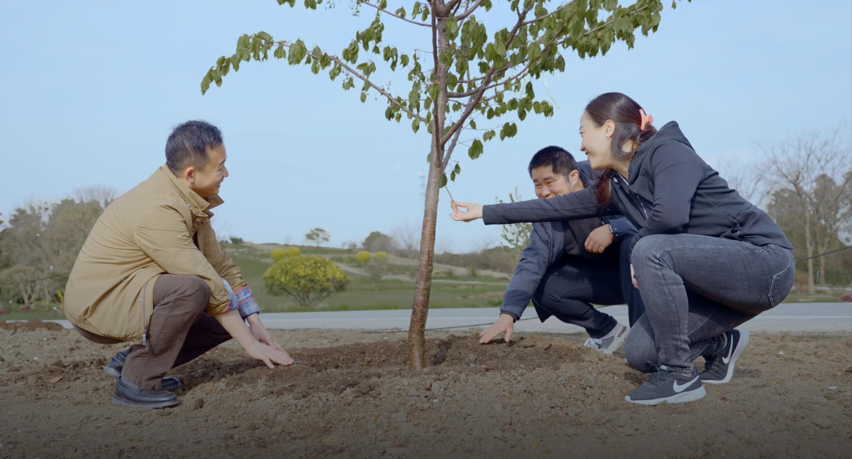 上海辰山植物园内,罗哲、刘凯、徐璟共种樱花树