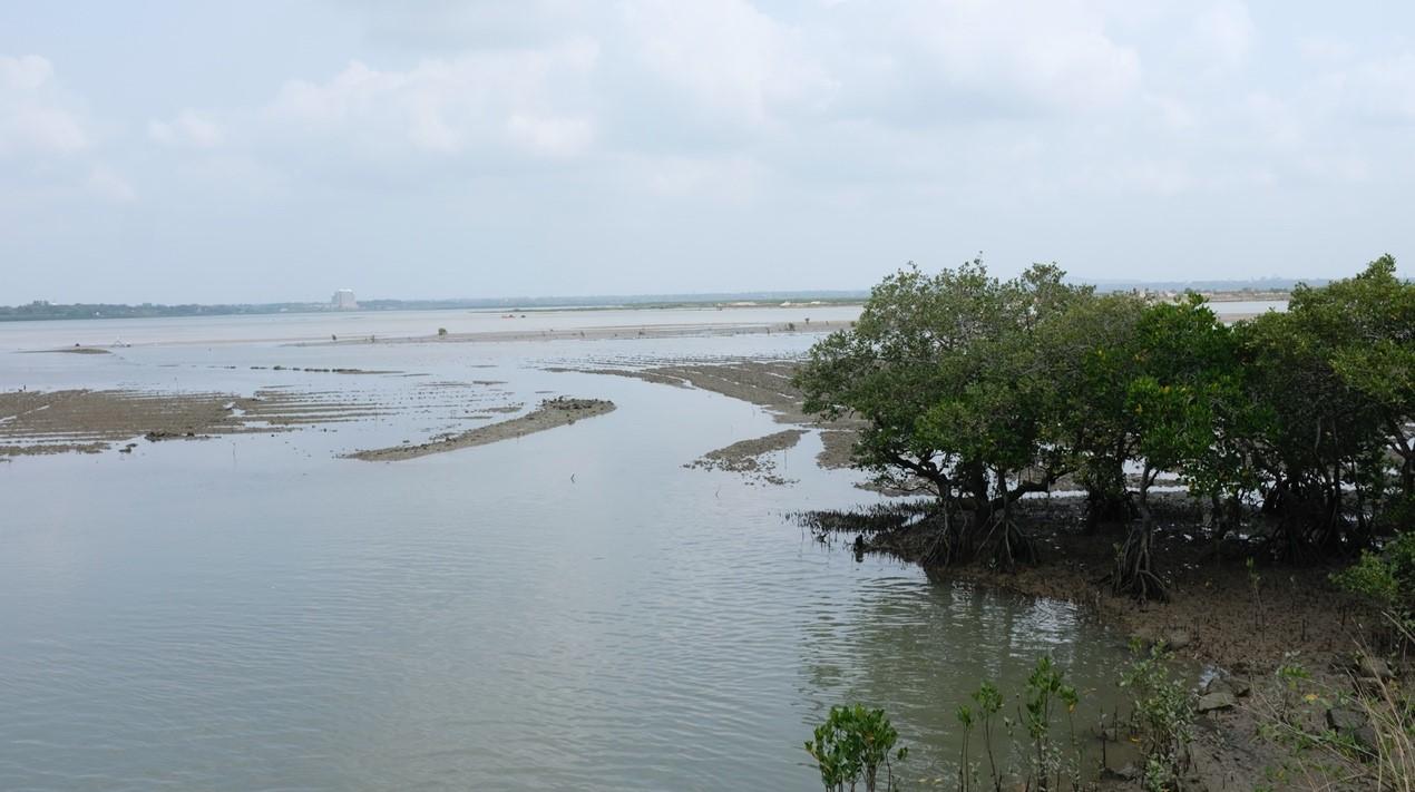 潮水退去,儋州湾裸露的淤泥质滩涂是鸻鹬类候鸟的天堂。 澎湃新闻记者 刁凡超 图
