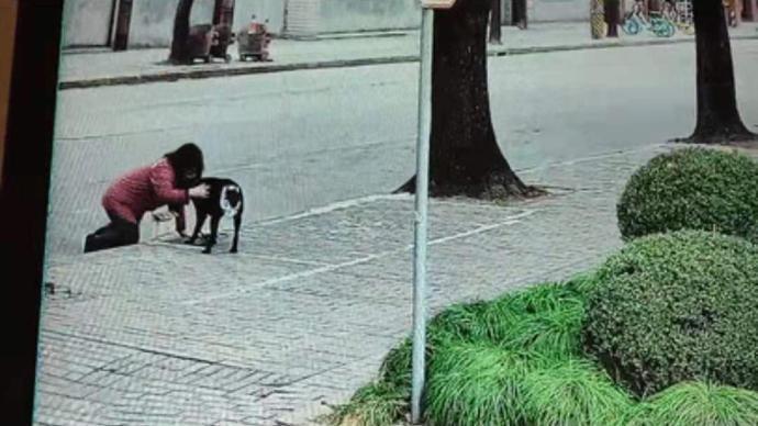 """导盲犬查德""""迷路""""在小区"""