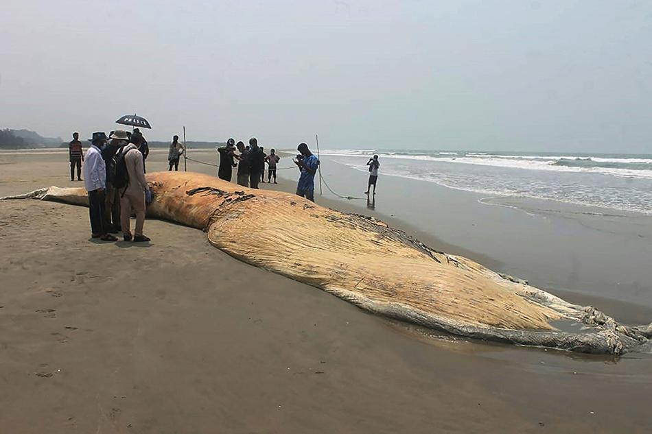 当地时间2021年4月10日,搁浅鲸鱼尸体被冲上孟加拉国科克斯巴扎尔海滩。