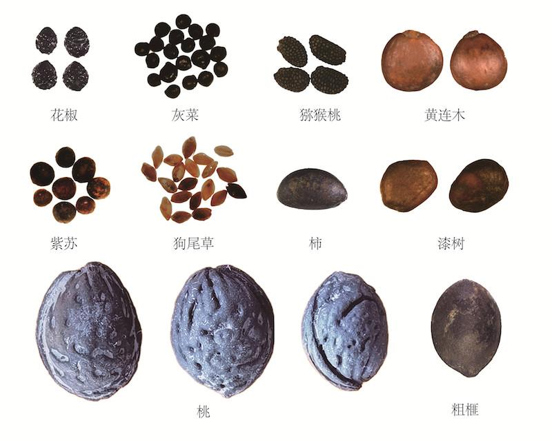 桃核等植物种子