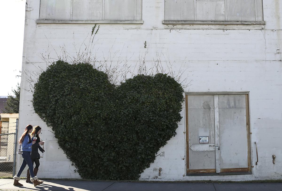 2014年2月12日,美国贝灵汉,一座粮仓建筑外的藤蔓长出了心形模样。