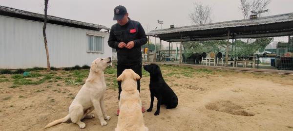 训练中的导盲犬
