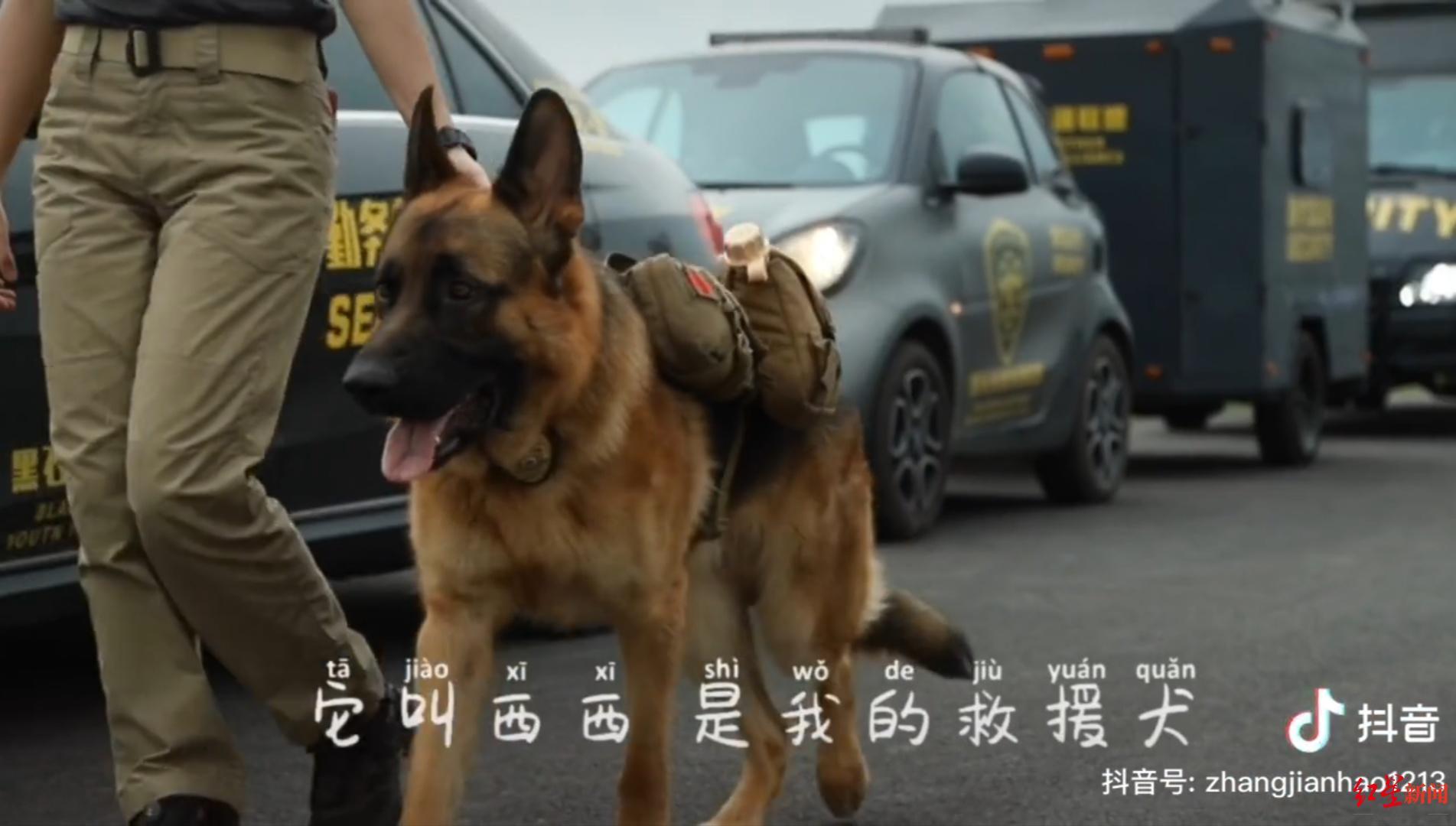 """成都救援犬""""西西""""失踪引数百万网友关注,抗洪中曾救8个人"""