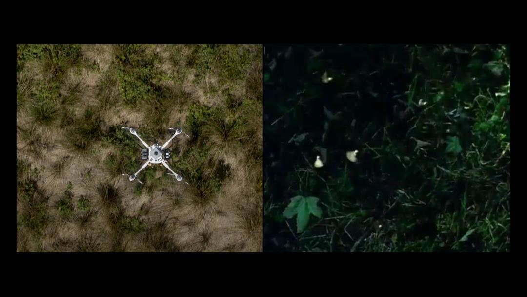 种子、图像与土地,双屏影像 阿维拉多·吉尔-福尼尔,尤西·帕里卡