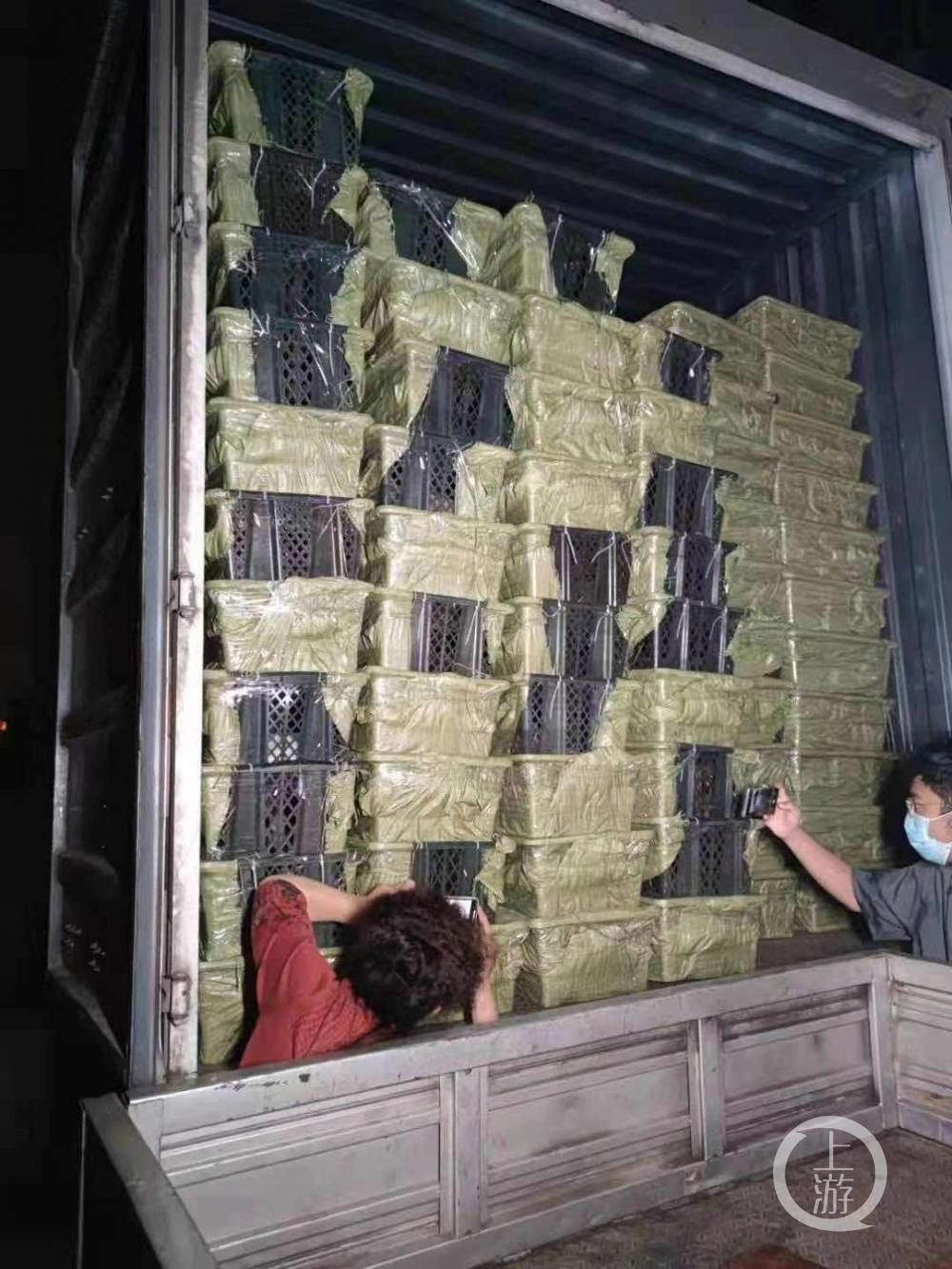 5月3日晚,四川成都,装有160余只小猫小狗的快递车。受访者供图