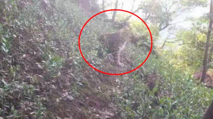 杭州出现的野生动物确认为豹子,警方正大力搜寻