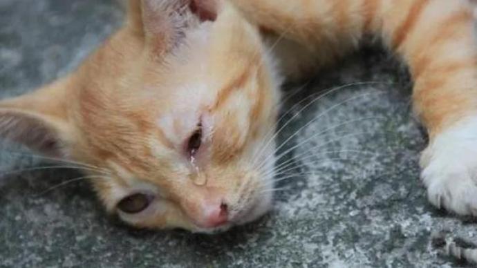 女孩暴打虐猫者被判刑,媒体:同情她不是对判决本身的反对