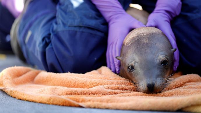 早安·世界|美国加州:有毒废物入海致当地海狮患癌