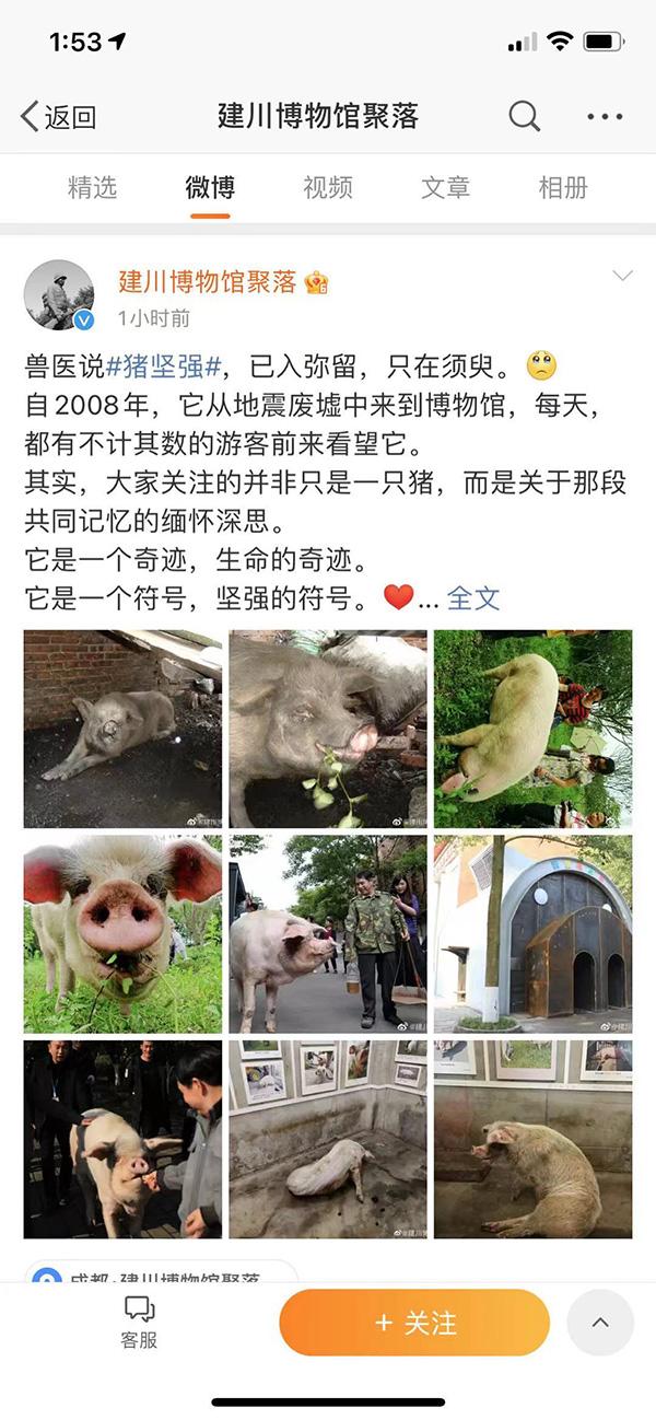 微博@建川博物馆聚落 截图