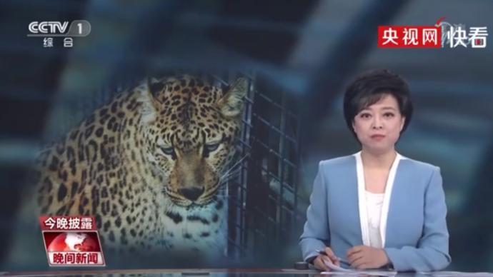 """央视评杭州野生动物世界""""瞒豹"""":只见金钱不见豹"""