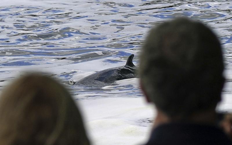 当地时间2021年5月10日,英国伦敦,9日搁浅在泰晤士河道的鲸鱼重返水中,民众在河岸边观看救助过程。