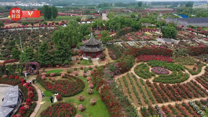 习近平河南行丨共享生态美景,助推乡村振兴——走进南阳月季博览园