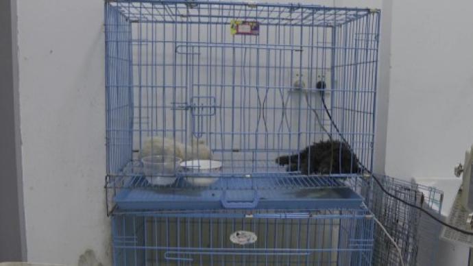 中通快递苏州宠物盲盒事件:只剩7只狗狗存活,尚在治疗