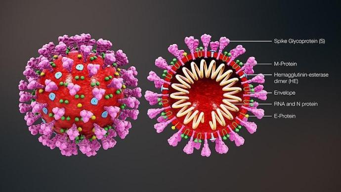 上海新华医院与多单位研发新冠病毒中和抗体,已进入临床试验