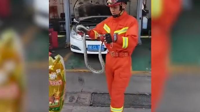 菜花蛇藏在引擎盖下,车主求助消防员