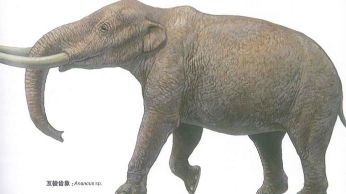象类的演化故事