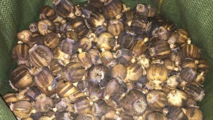 罂粟壳毒患:小吃店非法添加多发,一年多百余起案件宣判