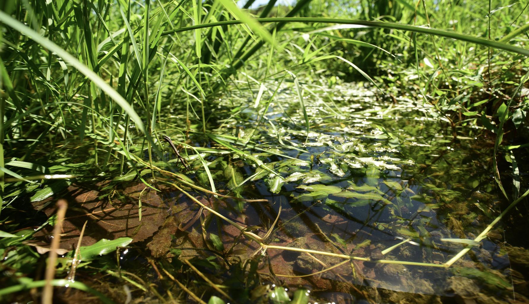 自然流动的小溪。郭陶然 图