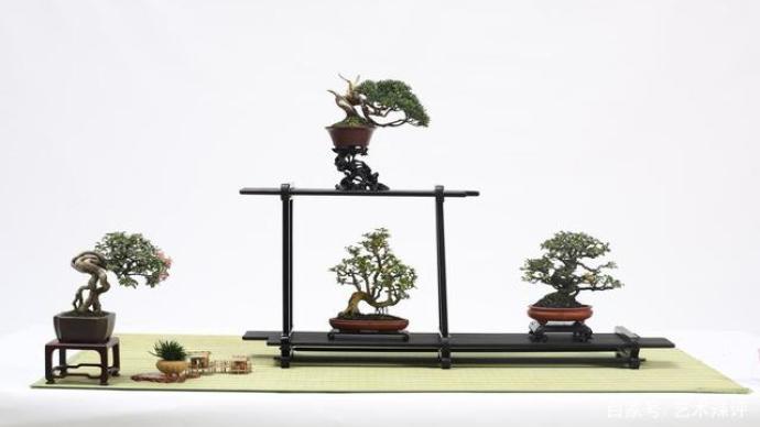 """看这些微型""""立体的画"""",全国小微盆景精品邀请展在沪举办"""