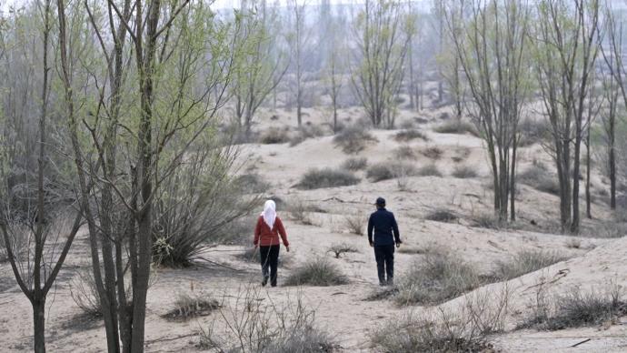 初心之路|21年间,她花光积蓄用3000亩绿树阻击黄沙