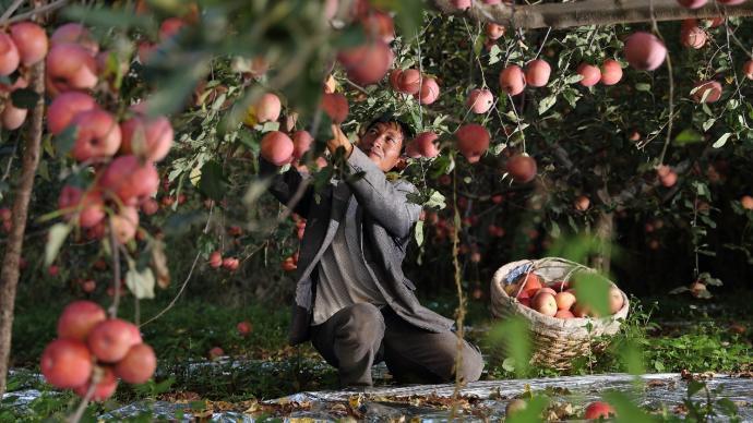 """解码""""百亿补贴"""":促进品牌下乡和农村市场的消费升级"""