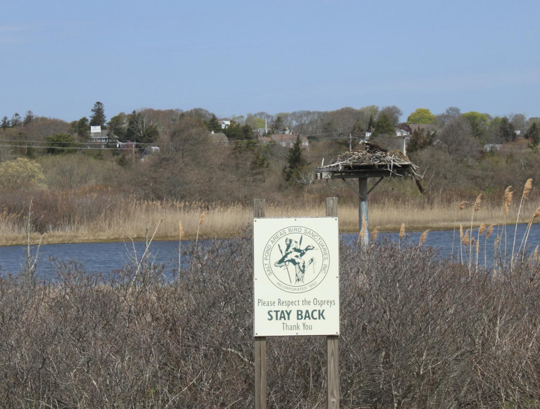 波士顿郊野,路上还能看到人与自然的关系,比如有鸟类保护地的牌子,提示人们要保护它。陈雪初 图