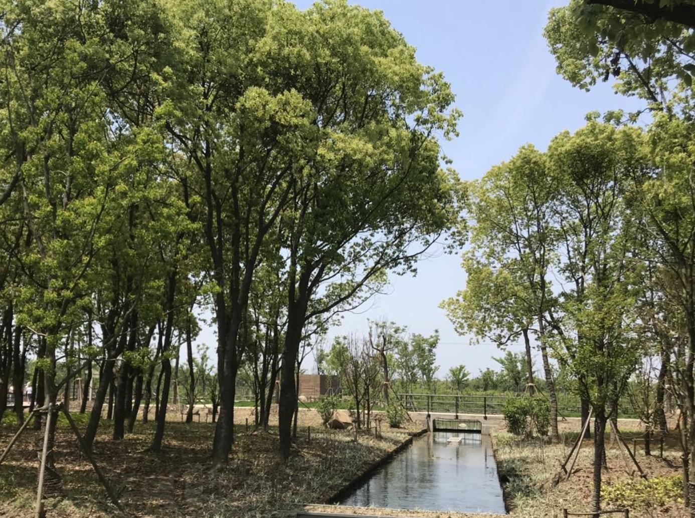 项目希望实现农田可持续生产,水养循环,生境维持繁荣,空间复合与共享。陈雪初 图
