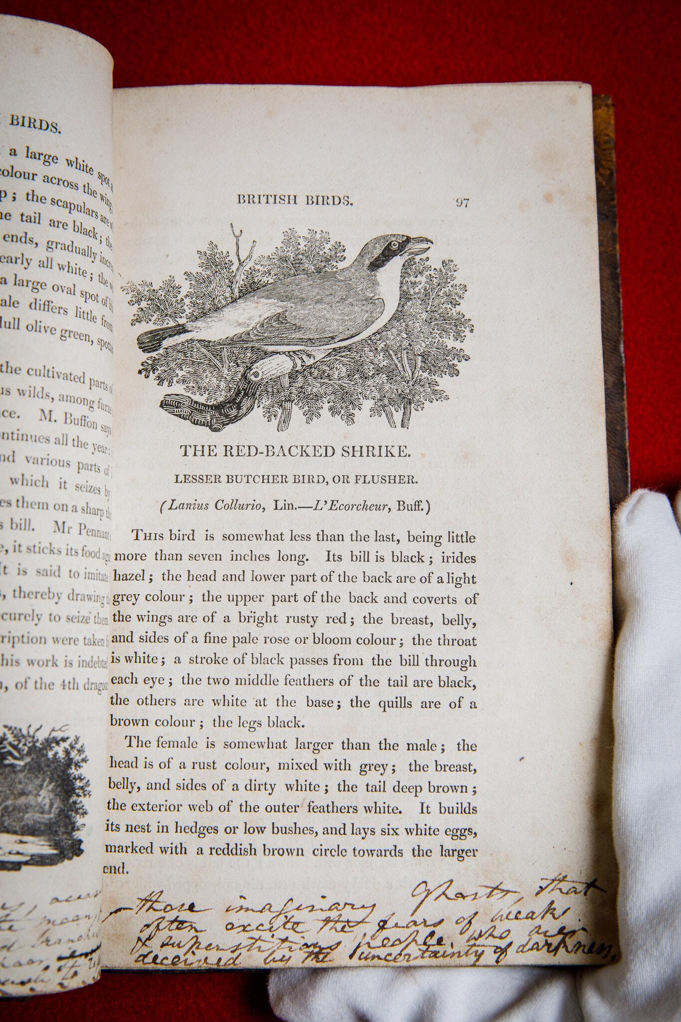 勃朗特一家所拥有的托马斯·比尤伊克的《英国鸟类史》副本 图源:苏富比拍卖行