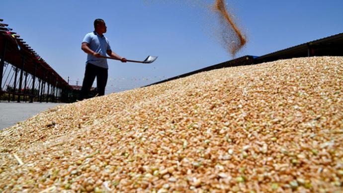 湖北最大小麦产区开镰,农业农村部:抢农时、增效率、夺丰收