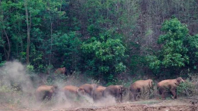 为防象群继续北迁致更大威胁,国家林草局派专家赴滇商讨措施