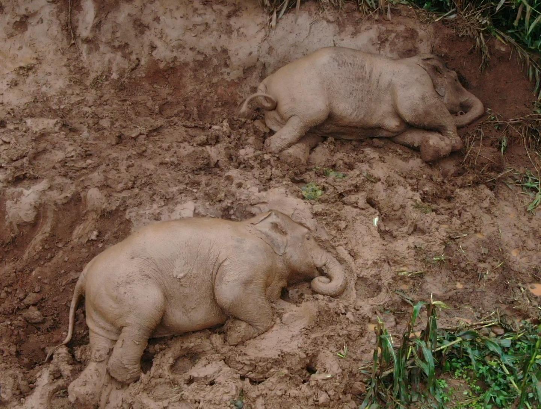 两只亚洲象在上坡休憩。 课题组航拍于云南