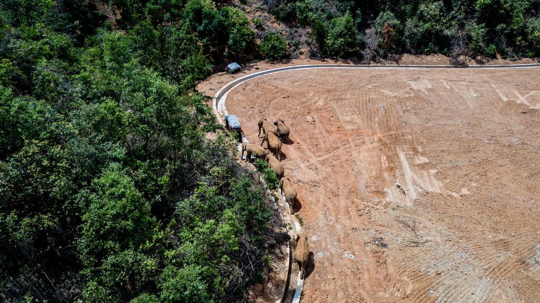 5月28日在云南省玉溪市峨山县境内拍摄的象群(无人机照片)。新华社 图