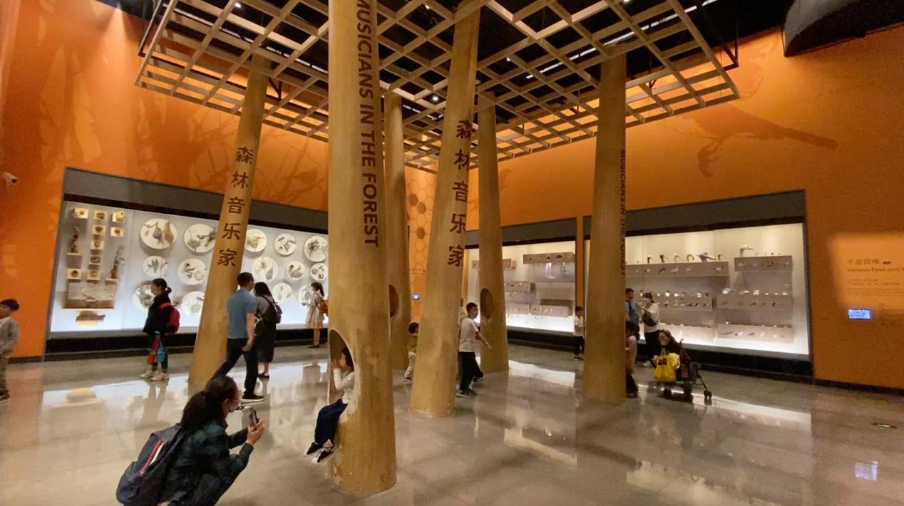 """上海自然博物馆""""森林音乐家""""展区。主讲人供图"""