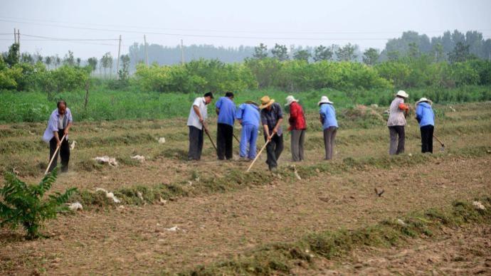 农业农村部:抓好产业和就业,守住不发生规模性返贫底线