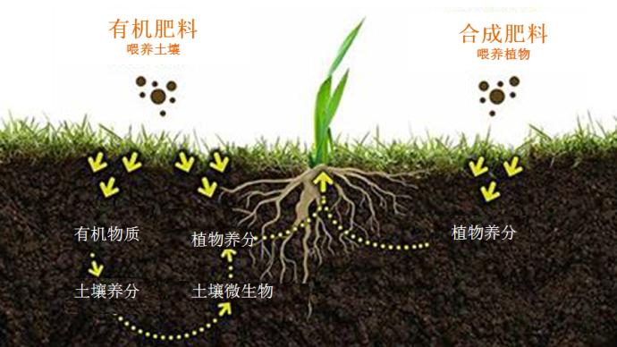 微观食物|土壤吃什么,我们就吃什么