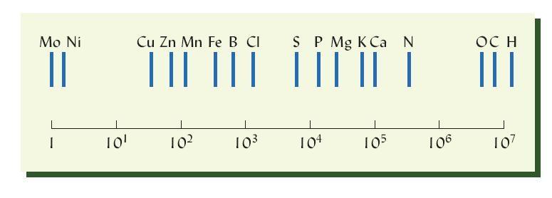 在作物所需的17种必需元素中,碳、氢、氧主要来自于大气和水,其他14种元素必须来自土壤(无土栽培除外),氮、磷,钾为大量元素,钙、镁、硫为中量元素,而铁、锰、铜、锌、钼、氯、硼和镍为微量元素。微量元素的需求量极少,他们在植物组织中含量比大量元素低一个或多个数量级,总体上说,如以钼的数量为1,铜、锌、锰、铁等则在几十到1000,而硫、磷、镁、钾、钙在1万到10万之间,最多的氢则是1000万。上图为处于开花期的苜蓿中,基本元素的相对原子数,以对数表示。注意,每个钼原子对应超过一千万个氢原子。但没有钼,植物就无法正常生长。图片来源:Weil RR and NC Brady, Nature and Properties of Soils, 2017 by Pearson Education, Inc. or its affiliates.
