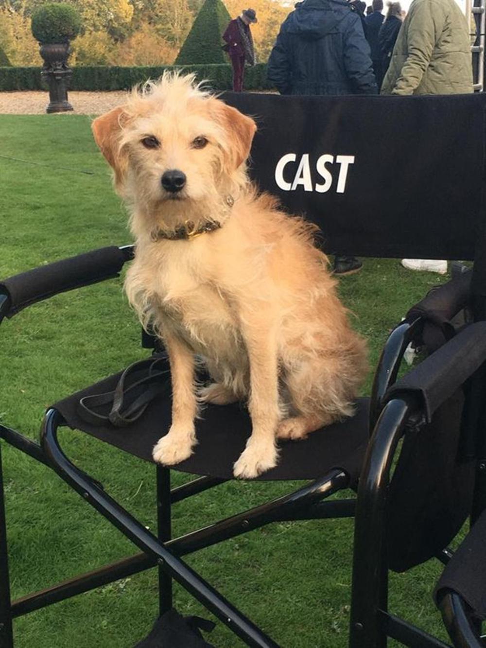 鲍比在《黑白魔女库伊拉》的拍摄现场。