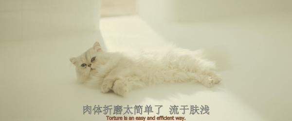 《007:幽灵党》里的白色猫咪