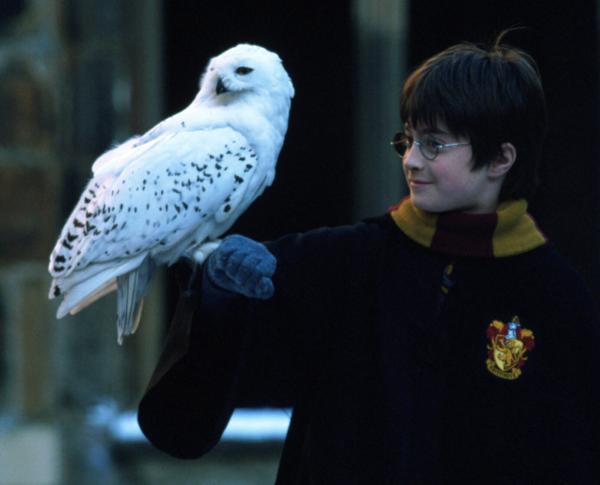 动物训练师朱莉·托特曼为哈利·波特系列的动物拍摄提供诸多支持