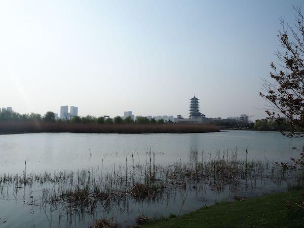 """在古运河边远眺""""大运塔"""""""