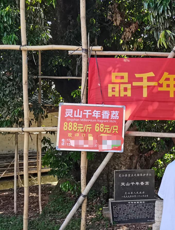 灵山县一荔枝树的荔枝售价68元一颗,888元一斤。 本文图片均由受访者提供