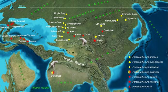 巨犀属在渐新世的分布和扩散。