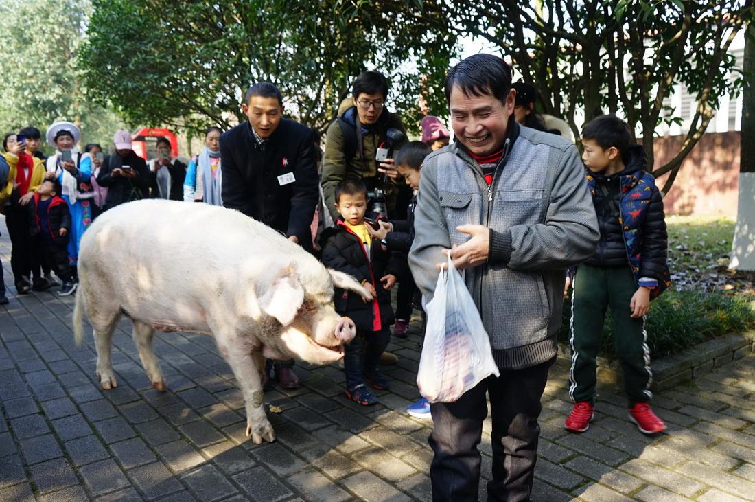 """2020年1月16日,""""猪坚强""""在游客的环绕中被饲养员从旧宅领入新家——""""猪坚强之家""""。"""