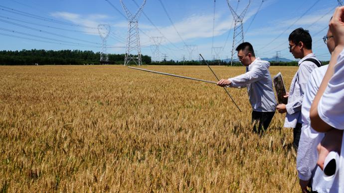 粮食产量是如何测算出来的?记者探访北京夏收实割实测