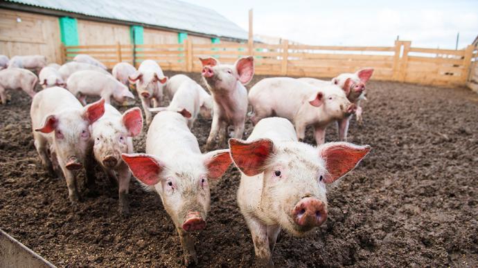 畜牧业协会:生猪价格下行勿恐慌,更别用赌博心态安排生产