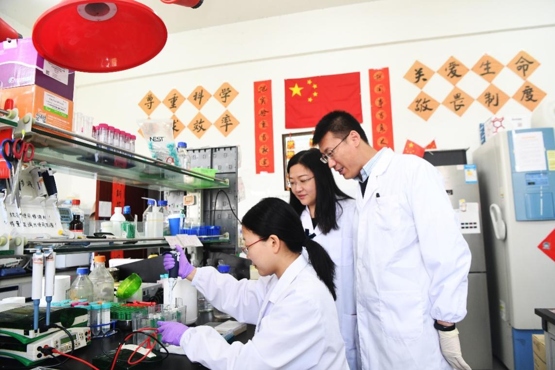 刘青松团队在实验室做实验。