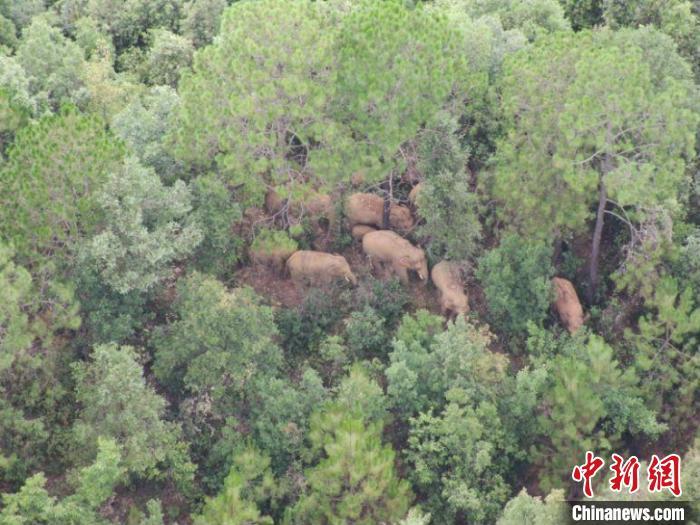 图为监测到的象群 云南省森林消防总队提供
