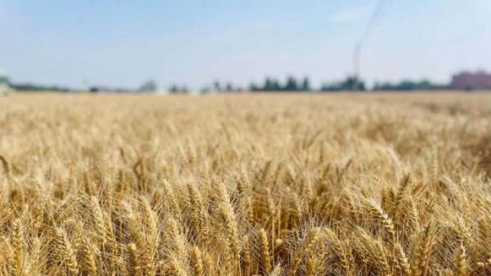 """""""兩化""""重組賦能數字農業,先正達集團發力高標準農田建設"""